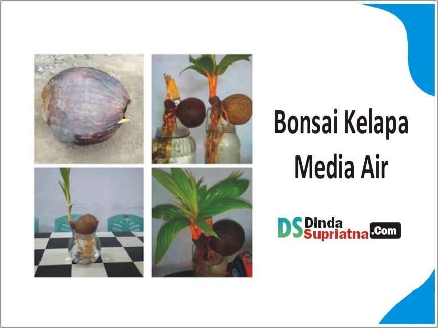 Bonsai Kelapa Media Air Dan Cara Tepat Melakukannya
